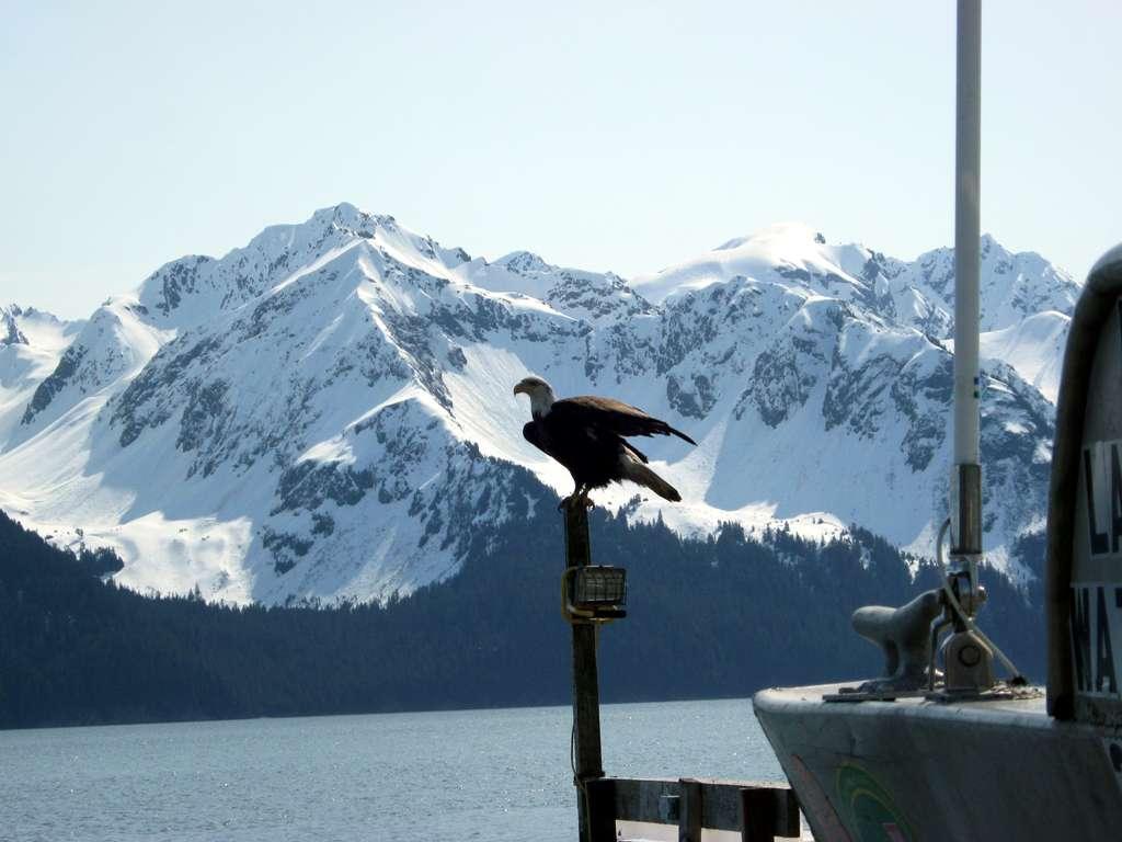 Seward...fiordi d'Alaska.